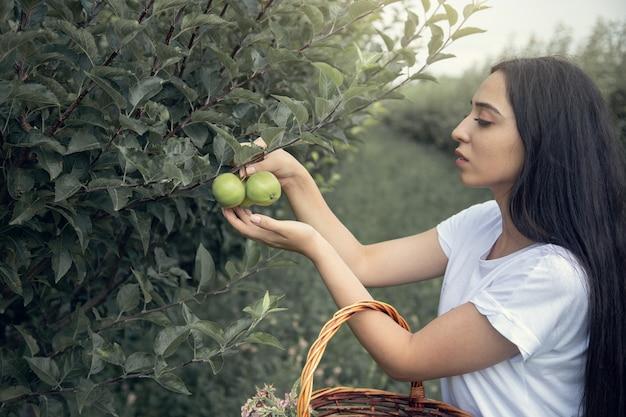 Kobieta wybrać jabłka na drzewie w ogrodzie