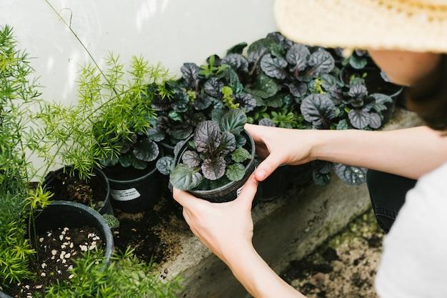 Kobieta wysoki kąt gospodarstwa roślin