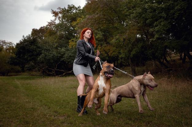 Kobieta z dwoma pięknymi pitbullami amerykańskiego staffordshire