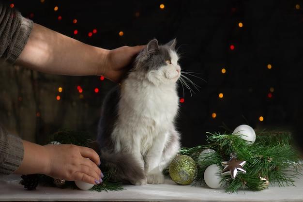 Kobieta z kotem blisko choinki w domu. zabawa ze zwierzakiem w domu na boże narodzenie