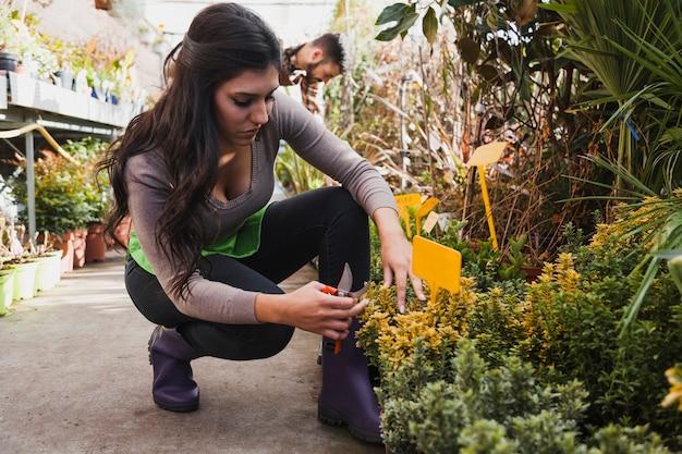 Kobieta z pruner pielęgnuje kwiaty