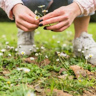 Kobieta zbiera małe białe kwiaty z ziemi