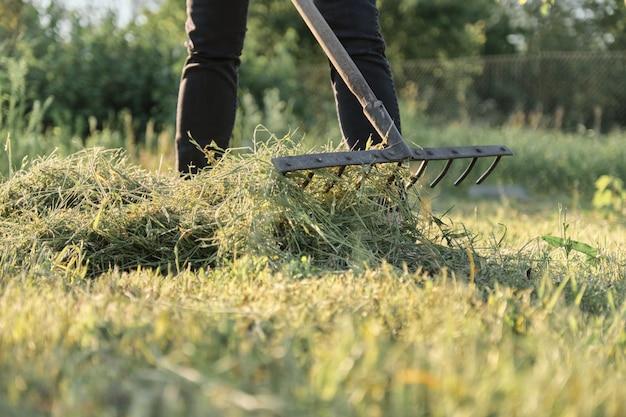 Kobieta zbiera świeżo ściętą trawę, wiosna lata sezon