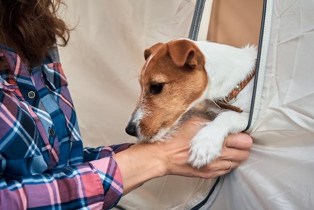 Kobieta ze swoim psem jack russell terrier. relacje i koncepcja opieki nad zwierzętami
