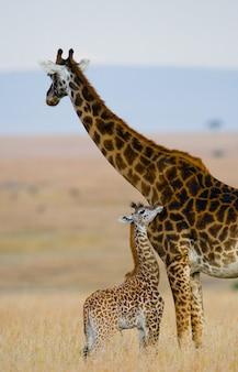 Kobieta żyrafa z dzieckiem na sawannie.
