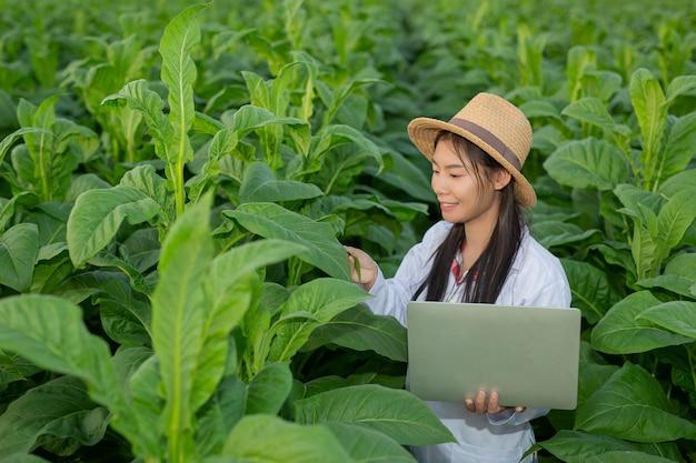 Kobiety badały liście tytoniu