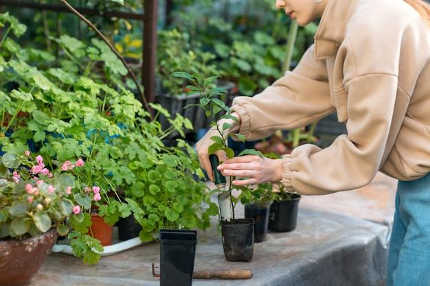Kobiety domu ogrodnictwa rośliny w szklarni