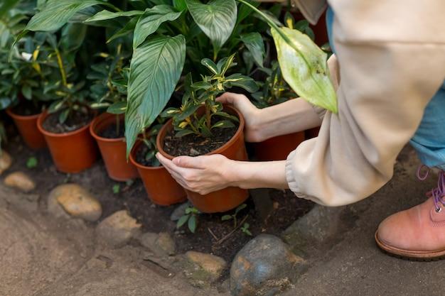 Kobiety mienia flowerpot w rękach. domowe rośliny ogrodnicze w szklarni.