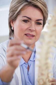 Kobiety mienia kręgosłupa doktorski model