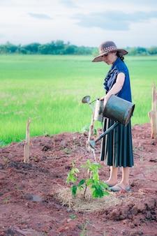 Kobiety podlewające drzewo na ziemi w gospodarstwie ekologicznym na wsi