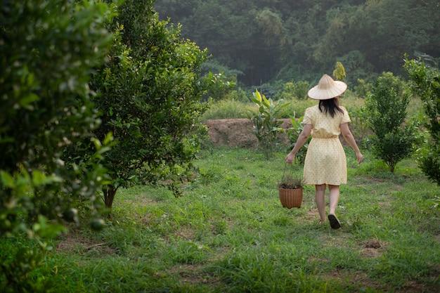 Kobiety przewożenia kosz w pomarańczowej drzewa plantaci
