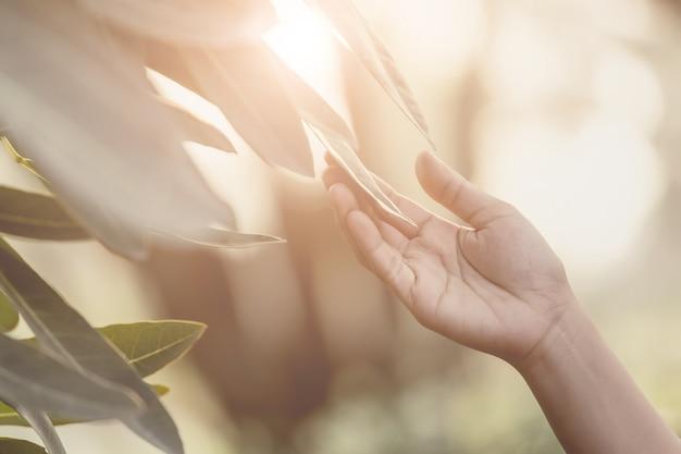 Kobiety ręka trzyma liść
