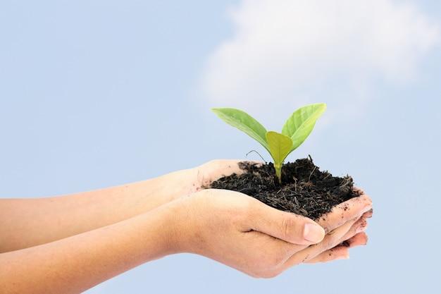 Kobiety ręka trzyma małej zielonej drzewnej rośliny