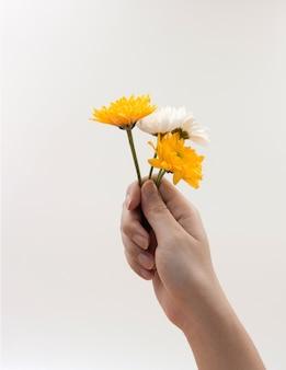 Kobiety ręka trzyma wiązkę kwiaty na bielu