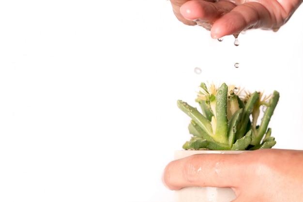 Kobiety ręka upuść wodę do małego kaktusa drzewa, wody na całe życie