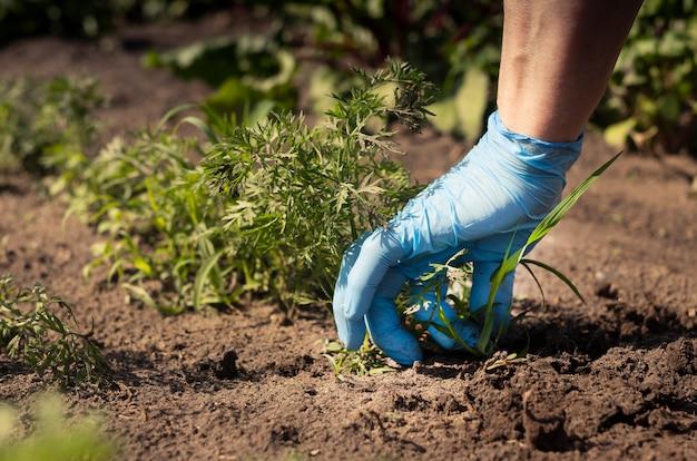 Kobiety ręka zbliżenie usuwanie chwastów z gleby w zielonym ogrodzie warzywnym