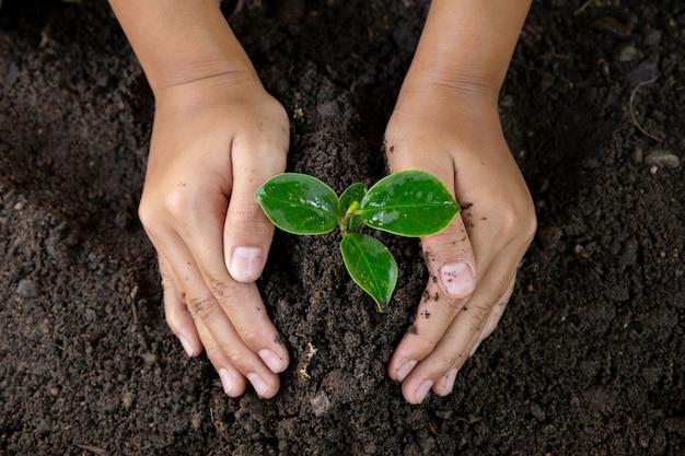 Kobiety ręki flancowania młody drzewo na czerni ziemi. zamyka up światowy środowiska dzień. ziemskiego dnia pojęcie