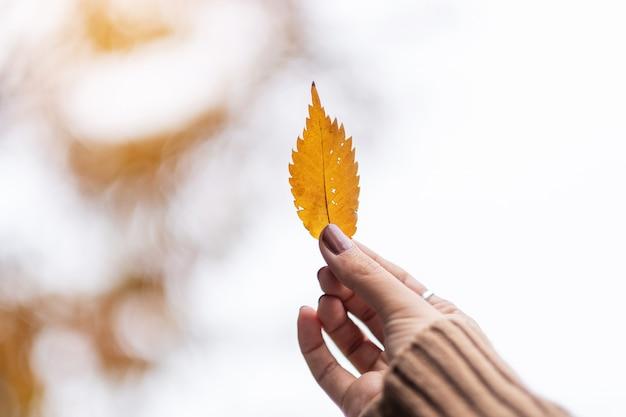 Kobiety ręki mienia koloru żółci jesień liście z kopii przestrzenią