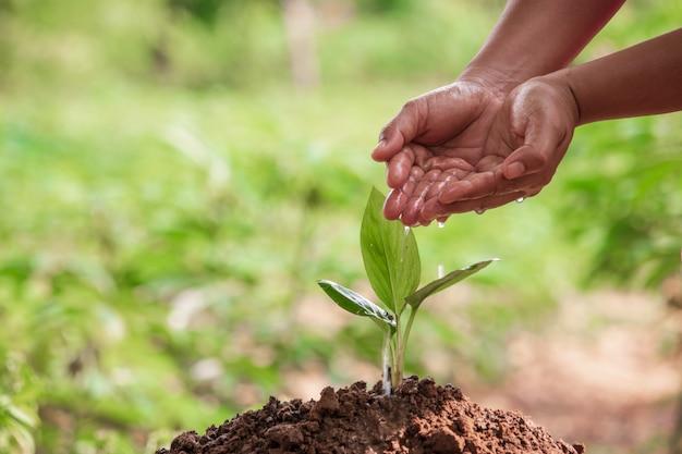 Kobiety ręki podlewania roślina w ogródzie