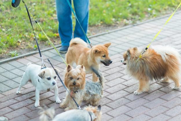 Kobiety spacerujące z grupą psów i szczeniaków w parku miejskim