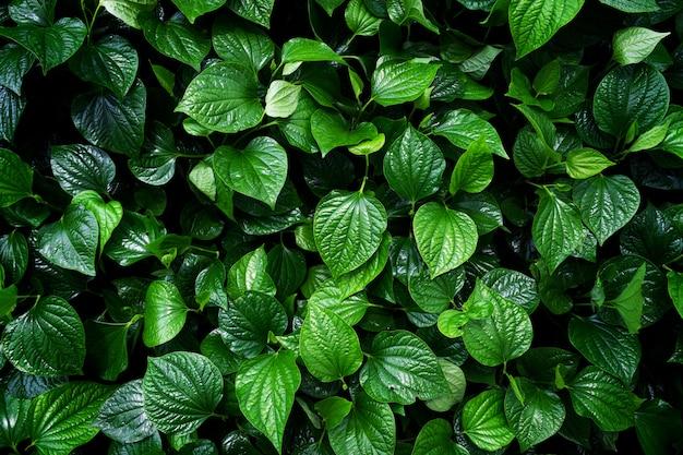 Kochaj koncepcję ziemi. tło zielony liść
