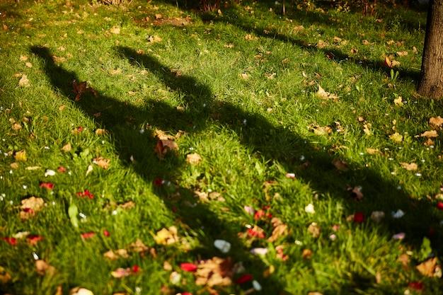 Kochanek cieniuj siebie i mnie w szczegółach tła trawy