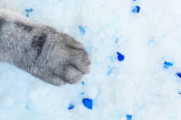 Kocia łapa z wypełniaczem dla kota z żelem krzemionkowym i zbliżeniem szarej stopy kota. pojęcie zwierząt domowych, opieka nad kotami.