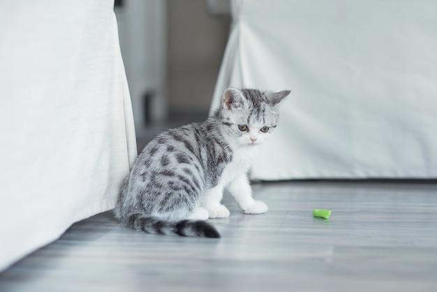 Kociak bawi się w domu niebieską wstążką