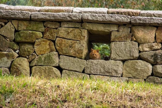 Kociak osiągający szczyt z otworu w starożytnej koreańskiej ścianie