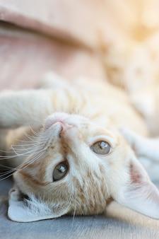 Kociak pomarańczowy pasiasty kot śpi i odpoczywa na drewnianym tarasie z naturalnym światłem słonecznym