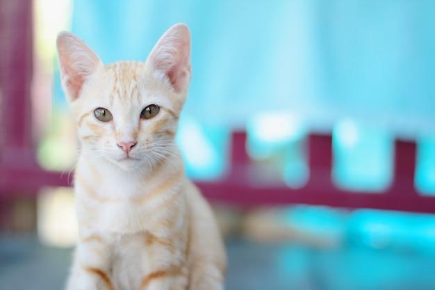 Kociak w pomarańczowe paski kot cieszy się i relaksuje na drewnianym tarasie z naturalnym światłem słonecznym