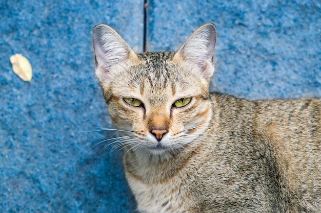 Kocie oczy, wyglądające na żółte, gapią się na nieszczerą hipokryzję