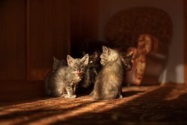 Kocięta bawiące się zabawką myszy