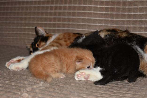Kocięta jedzą mleko od kotów