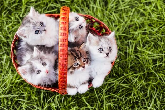 Kocięta w koszu na trawie na dworze