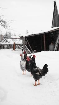 Koguty na tle zimy. pionowe zdjęcie na wsi. koncepcja gospodarstwa i zwierząt gospodarskich