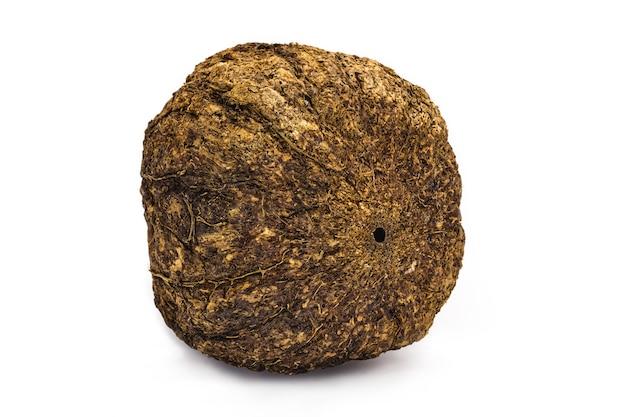 Kokos z orzecha brazylijskiego ze skorupką na białym tle, orzech zwyczajny z ameryki południowej