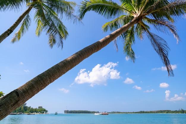 Kokosowa drzewko palmowe rama z piękną tropikalną denną scenerią w phuket thailand, pojęcie wakacje letni