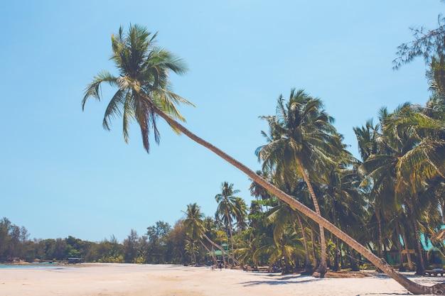 Kokosowe drzewa na plaży wystające do morza