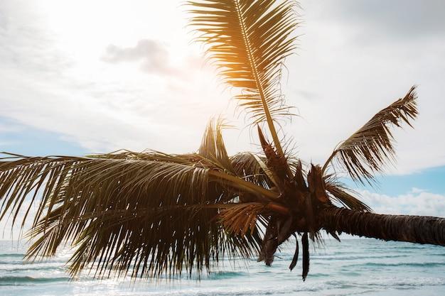 Kokosowe drzewo na morzu.