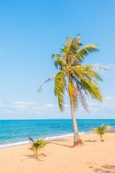 Kokosowe drzewo na plaży
