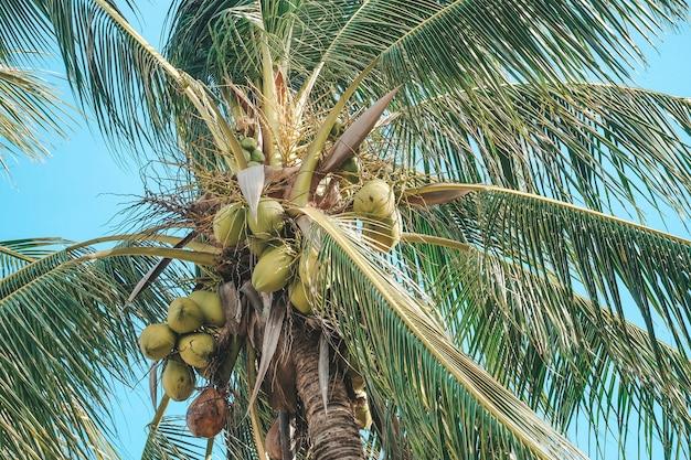 Kokosowe drzewo z błękitne niebo i chmury na morzu. ton pastelowy lub minimalny.