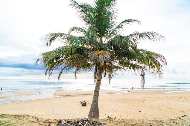 Kokosowe drzewo z tropikalnej plaży