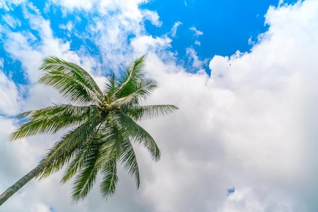 Kokosowe Palmy. (filtrowany Obraz Przetwarzany Rocznika Efekt. Darmowe Zdjęcia