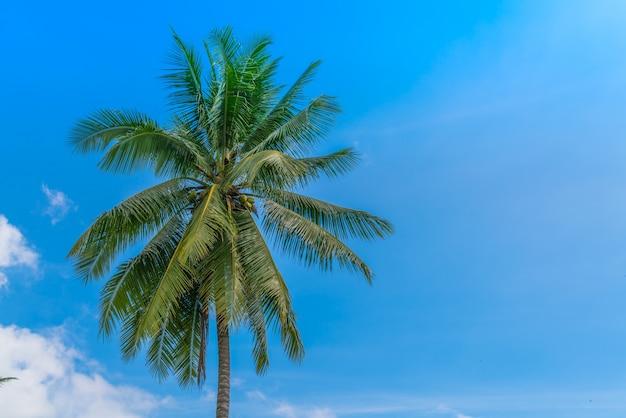 Kokosowe palmy. (filtrowany obraz przetwarzany rocznika efekt.
