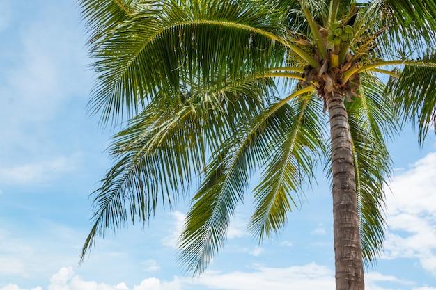 Kokosowe palmy na pięknej tropikalnej plaży