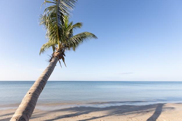 Kokosowe palmy na plaży rano wyczyść tła nieba