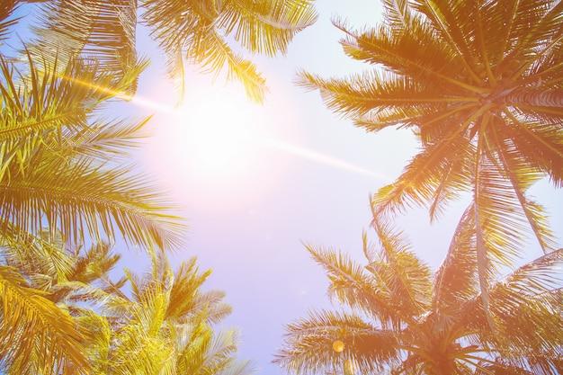 Kokosowego drzewa i nieba tło w ciepłym brzmieniu.
