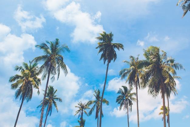 Kokosowi drzewa wtyka out morze na jasnym niebo dniu, koh kood, tajlandia