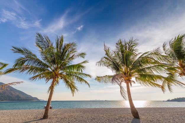 Kokosowi drzewka palmowe na białej piaskowatej plaży i niebieskim niebie w południe tajlandia